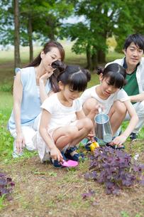植物に水をやる家族の素材 [FYI00922844]