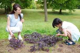 植物に水をやる家族の素材 [FYI00922846]