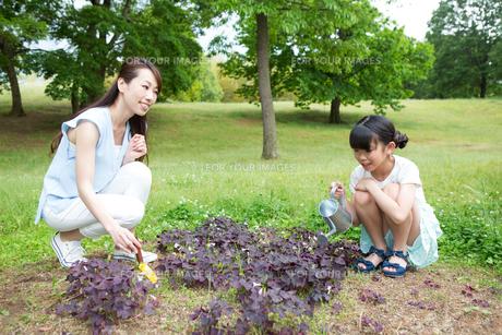植物に水をやる家族の素材 [FYI00922857]
