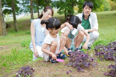 植物に水をやる家族の素材 [FYI00922871]