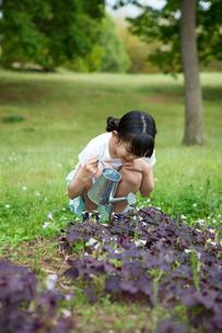 植物に水をやる小学生の素材 [FYI00922875]