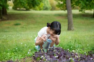植物に水をやる小学生の素材 [FYI00922888]