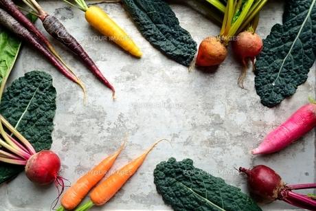 カラフルな根菜と黒キャベツ 銀色背景の写真素材 [FYI00922965]