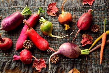 カラフルな根菜と落葉 ウール生地背景の写真素材 [FYI00923152]