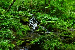 森の中の小さな滝の写真素材 [FYI00923329]