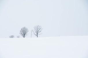 雪の丘に立つ冬木立 美瑛町の写真素材 [FYI00923390]
