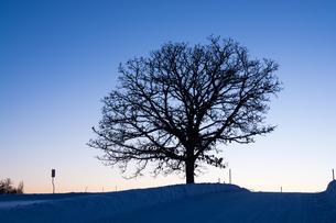 夕暮れ音空と冬木立の写真素材 [FYI00923397]