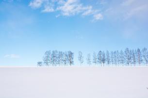 冬の青空とシラカバ並木 美瑛町の写真素材 [FYI00923398]