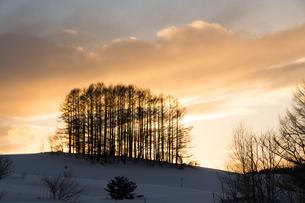 夕暮れの丘と冬のカラマツ林の写真素材 [FYI00923401]