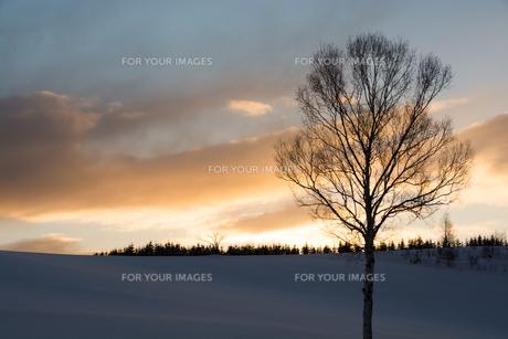 夕暮れの丘と冬木立の写真素材 [FYI00923402]
