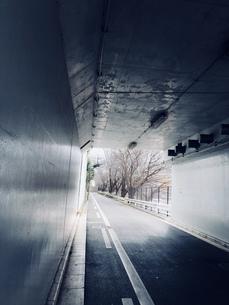 トンネルと冬の桜木の写真素材 [FYI00923551]