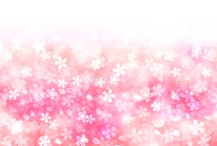桜のイラスト素材 [FYI00923627]