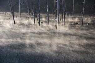 朝もやの自然湖の写真素材 [FYI00923797]