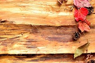 紅葉した落ち葉と松ぼっくりの写真素材 [FYI00923884]