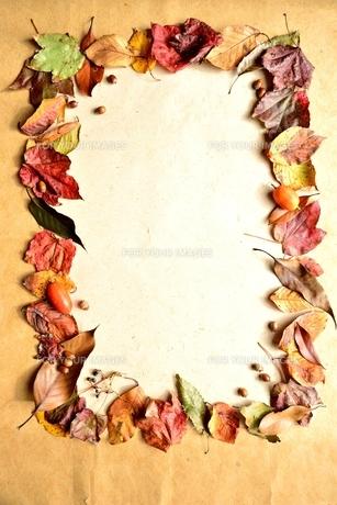 枯葉のフレームの写真素材 [FYI00924063]