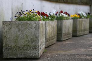 公園の花壇の花の写真素材 [FYI00924294]
