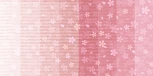 桜のイラスト素材 [FYI00924362]