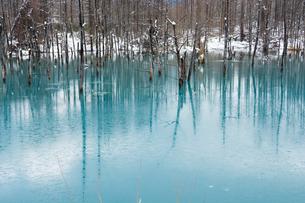 初冬の湖 美瑛町の写真素材 [FYI00924525]