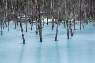 初冬の湖 美瑛町の写真素材 [FYI00924531]