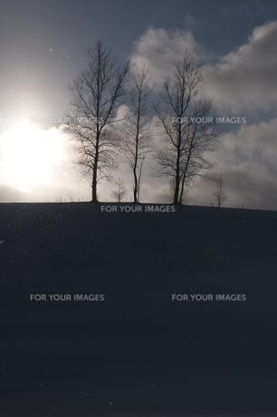 冬空に立つ冬木立 美瑛町の写真素材 [FYI00924540]