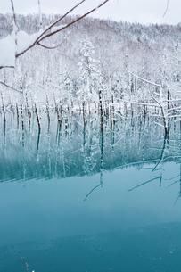 初冬の湖 美瑛町の写真素材 [FYI00924544]