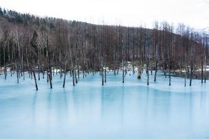 初冬の湖 美瑛町の写真素材 [FYI00924550]