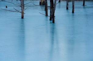初冬の湖 美瑛町の写真素材 [FYI00924551]