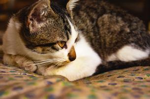遠くを見つめる母猫の写真素材 [FYI00924563]