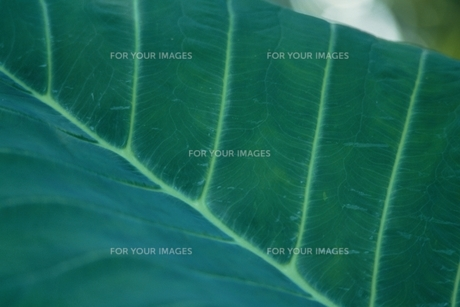 葉の表面の素材 [FYI00924749]