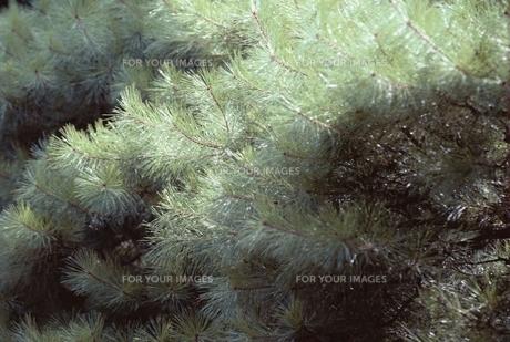 花・植物 木 葉の素材 [FYI00925241]