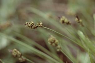 花・植物 葉の素材 [FYI00925317]