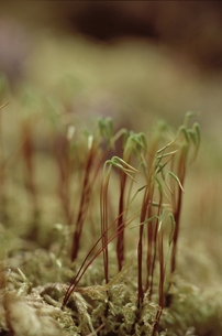 花・植物 植物の素材 [FYI00925349]