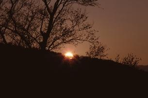 木のシルエットと夕日の素材 [FYI00925393]