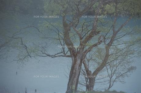 湖面と霧と木の素材 [FYI00925629]