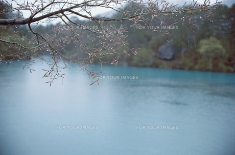 湖面と森の素材 [FYI00925686]