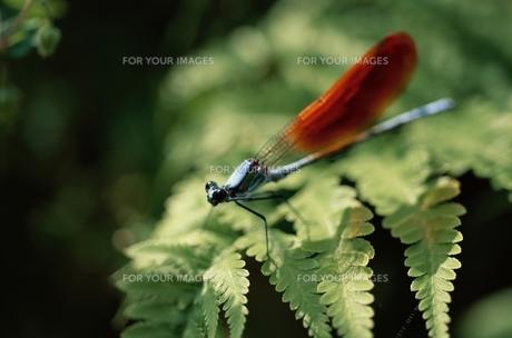 昆虫の素材 [FYI00926156]