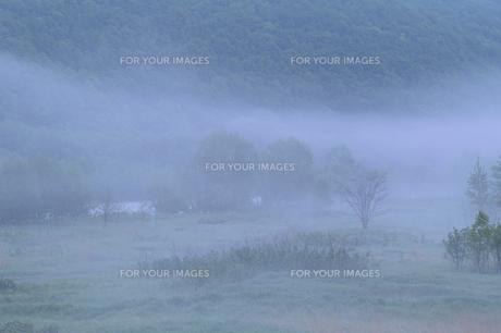 朝霧の木の素材 [FYI00927680]