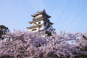 今治城と桜の素材 [FYI00927727]