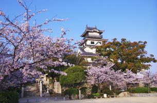 今治城と桜の素材 [FYI00928157]