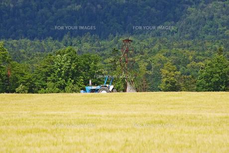 麓郷展望台の麦畑とトラクターの素材 [FYI00928918]