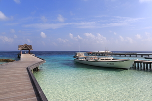 モルディブの海と桟橋の素材 [FYI00933489]