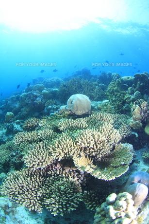 モルディブのサンゴ礁と陽光の素材 [FYI00933730]