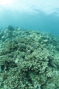 モルディブのサンゴ礁の素材 [FYI00933817]