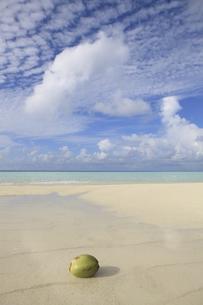 モルディブの青空と白い雲と砂浜に浮かぶヤシの実の素材 [FYI00934211]