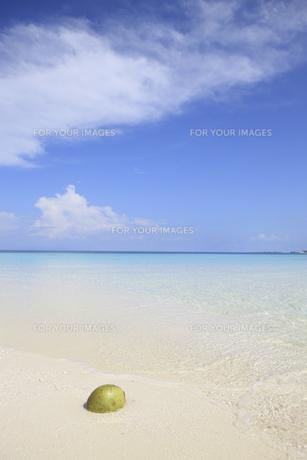 モルディブの青空と砂浜に浮かぶヤシの実の素材 [FYI00934222]