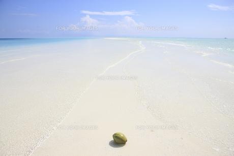 モルディブの砂州に浮かぶヤシの実の素材 [FYI00934254]