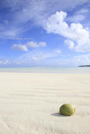 モルディブの青空と白い雲と砂浜に浮かぶヤシの実の素材 [FYI00934260]