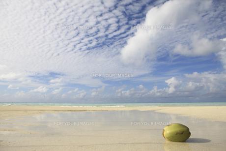 モルディブの青空と白い雲と砂浜に浮かぶヤシの実の素材 [FYI00934329]