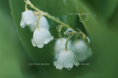 花の素材 [FYI00934566]