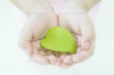 新緑の葉を持つ手の素材 [FYI00934604]